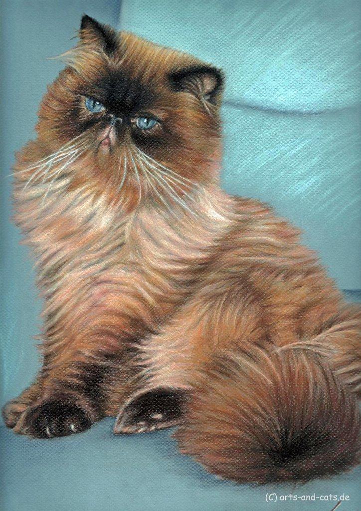 Perserkatze - Persian Cat