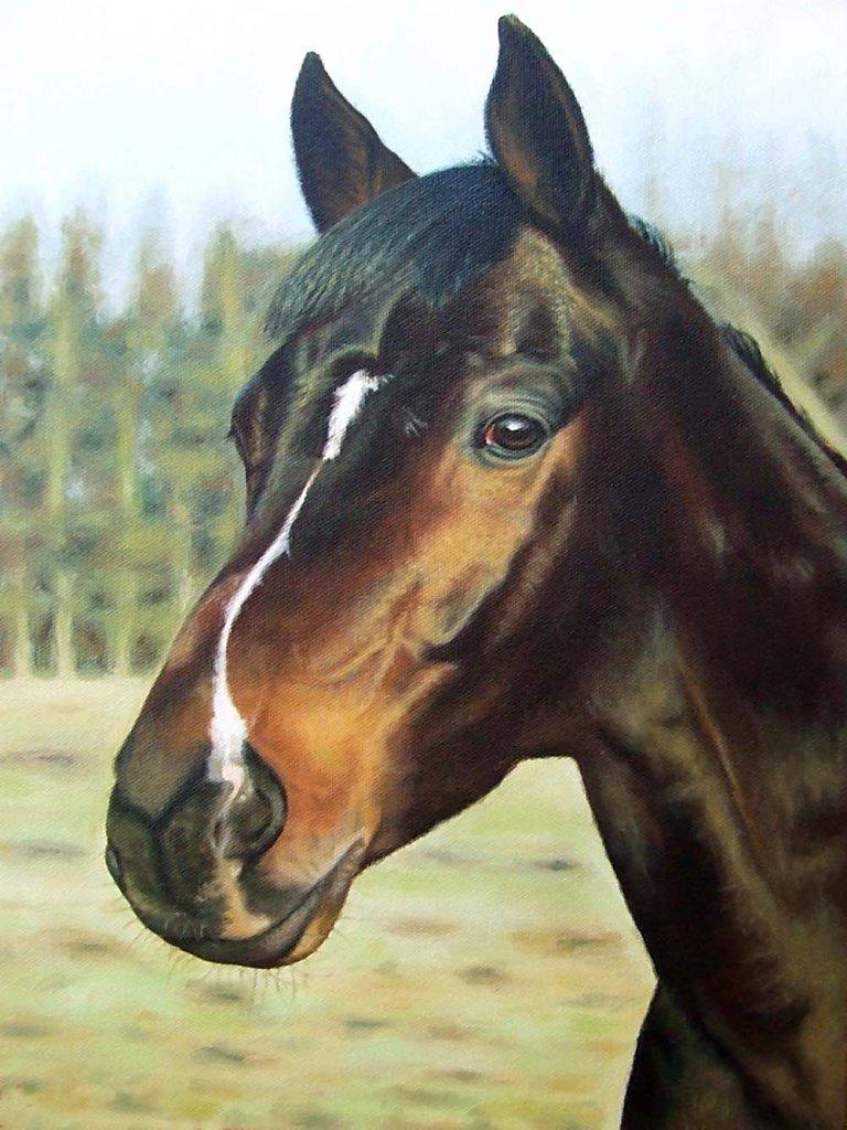 Russisches Pferd - Russian Horse