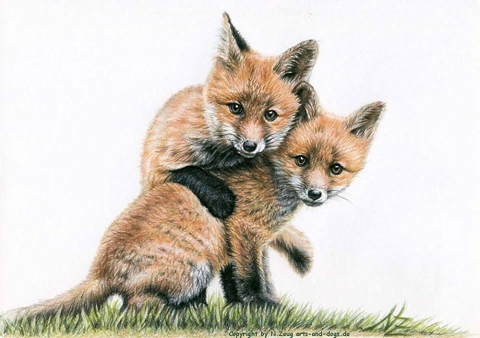 Fuchswelpen - Fox Kids