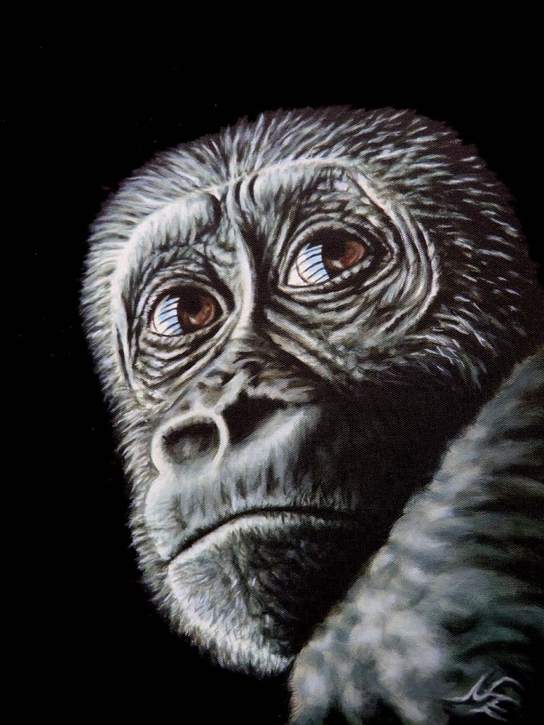 Junger Gorilla - Young Gorilla