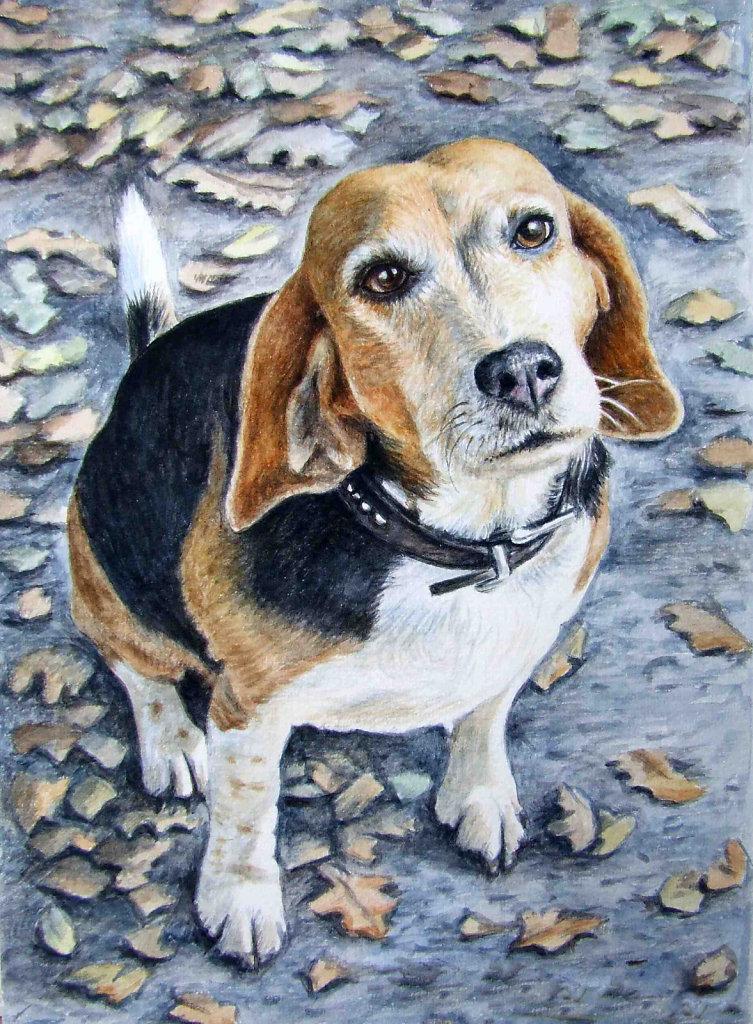 Beagle im Herbst - Beagle in Autumn