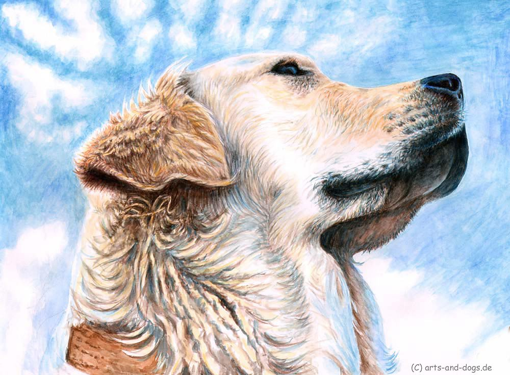 Golden Retriever Sky