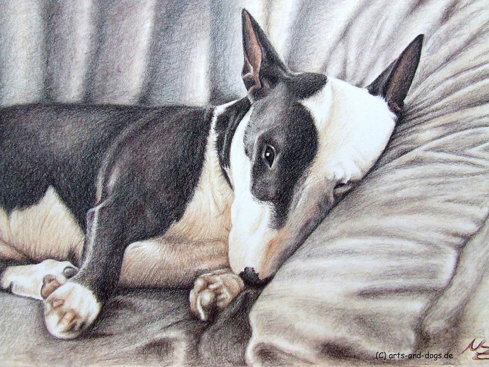 Mini Bulldog Terrier