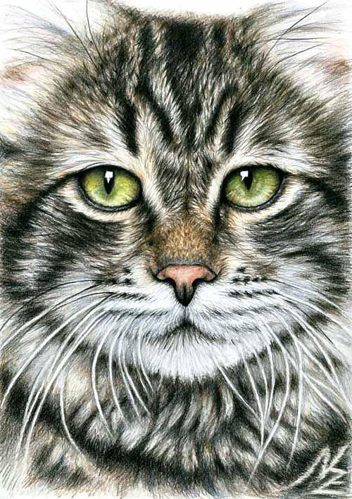 Katzengesicht - Cats Face