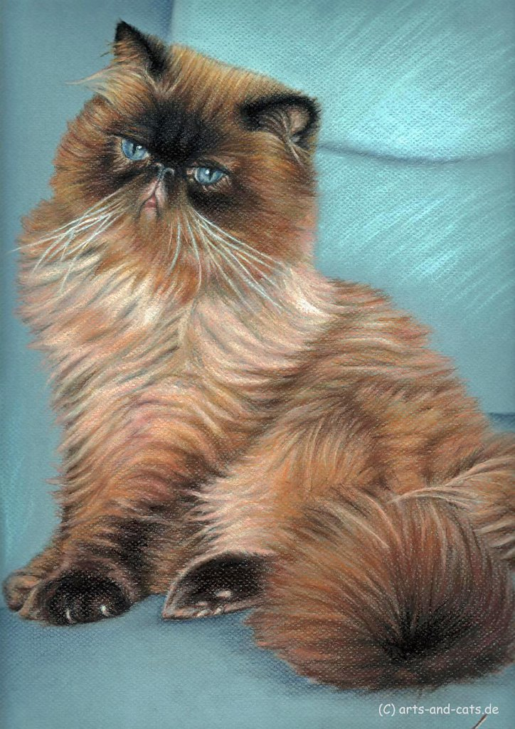 Perserkatze - Persian Cat