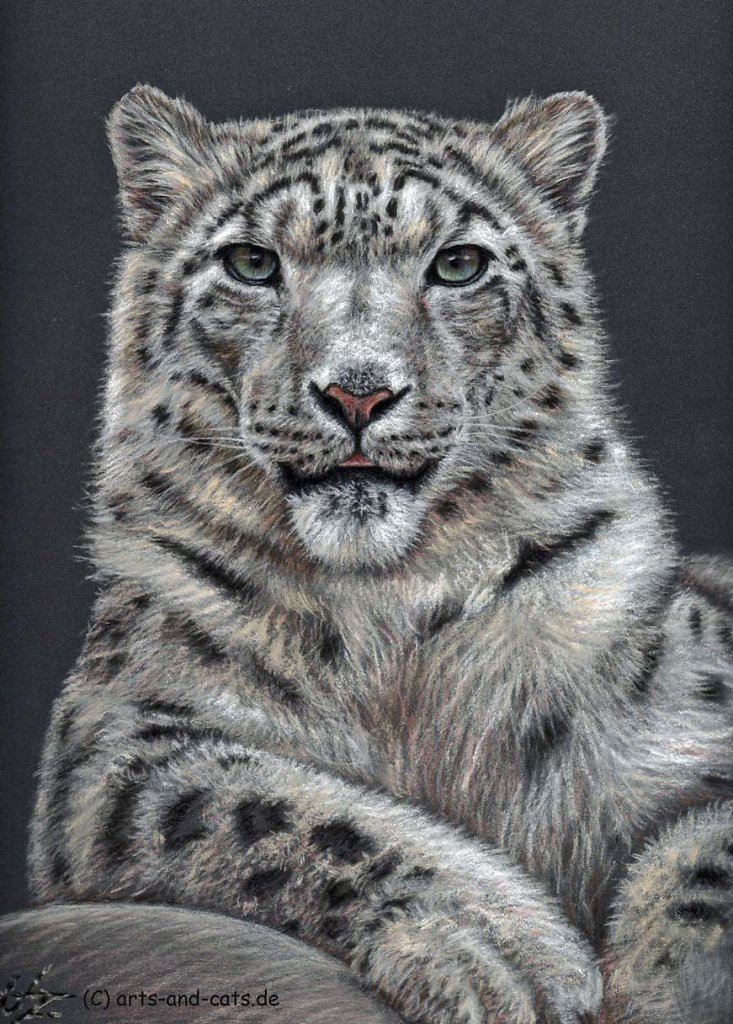 Schneeleopard - Snow Leopard