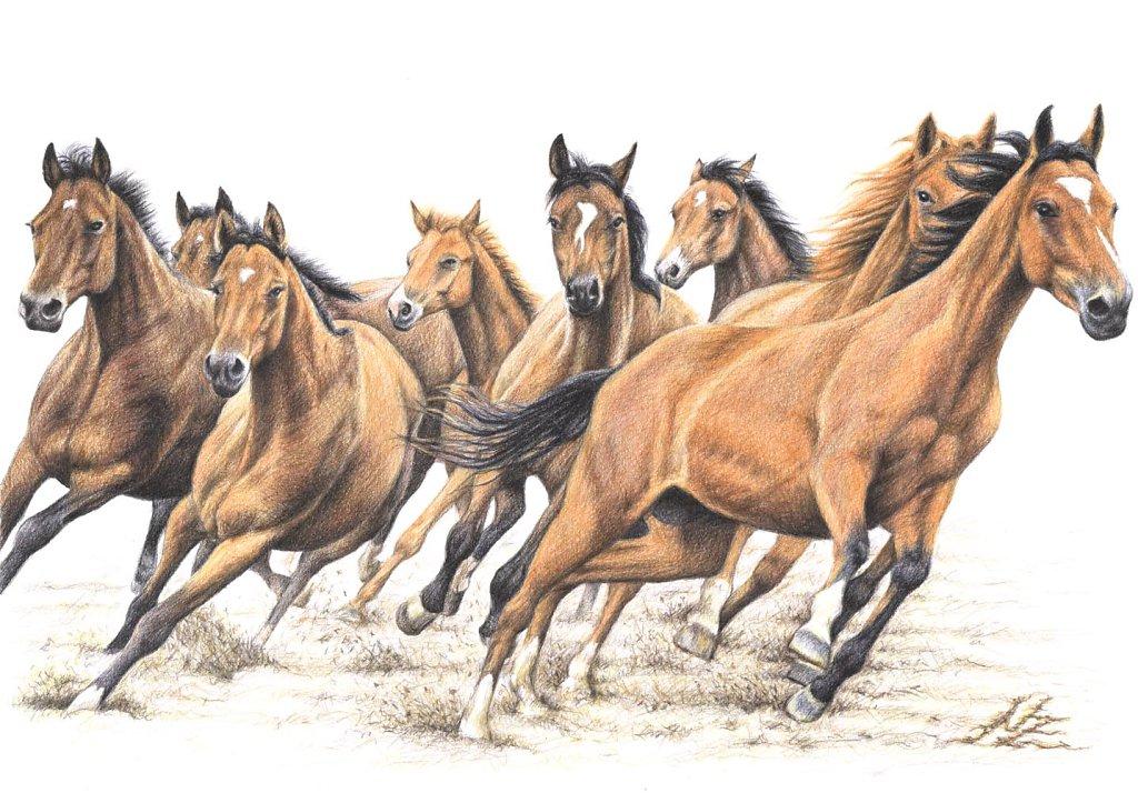 Trakehner Herde