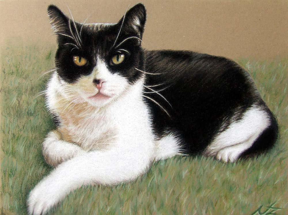 Kater - Tomcat