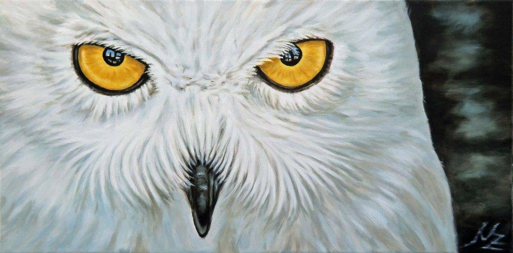 Schnee Eule - Snow Owl