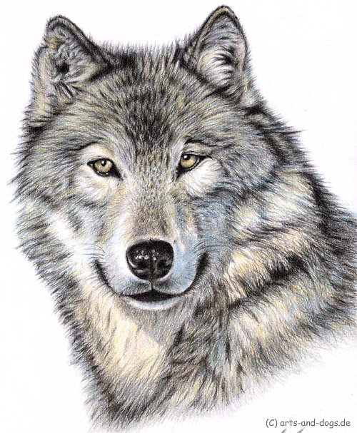 Der Wolf - The Wolf