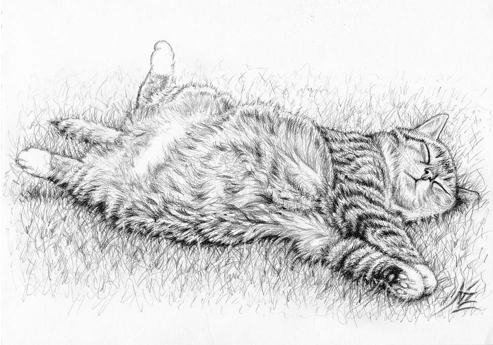 Relax Cat