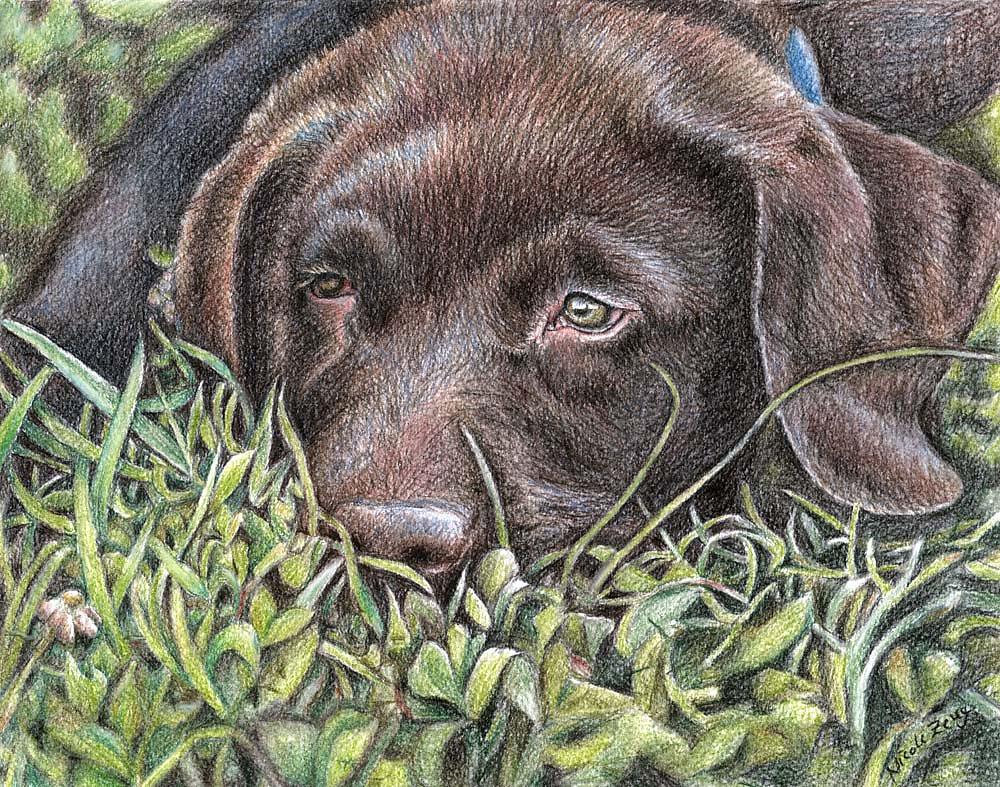Müder Labbi-Welpe - Tired Young Labrador