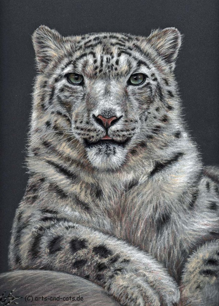 Schneeleopard - Snowleopard