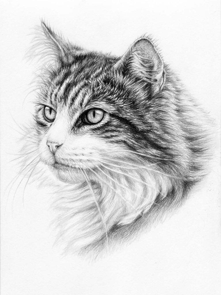 Katzenschönheit - Cat Beauty