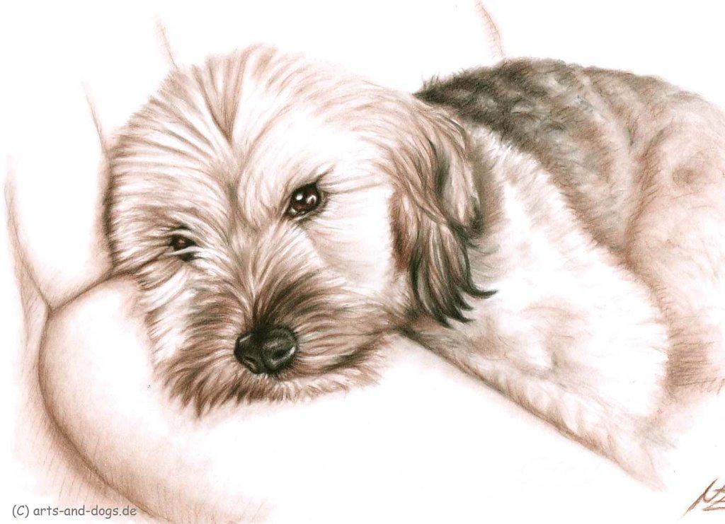 Sofahund - Couchdog