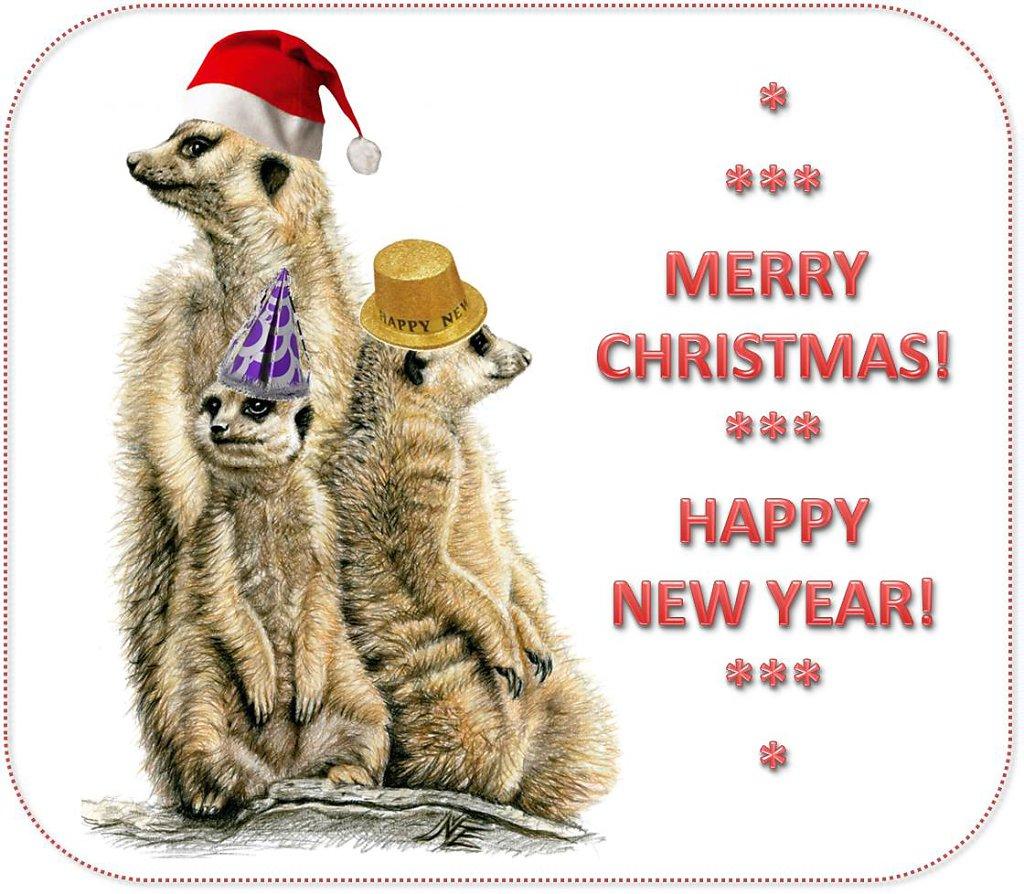 Meerkats-xmas-newyear.jpg
