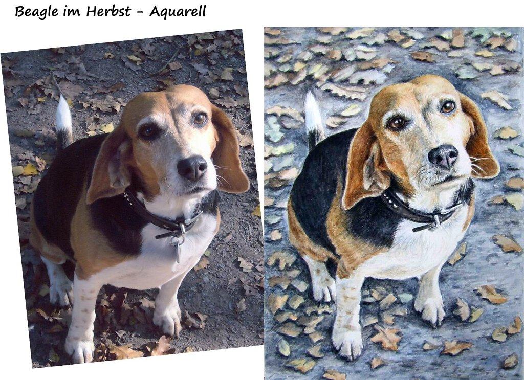 beagle-aquarell.jpg