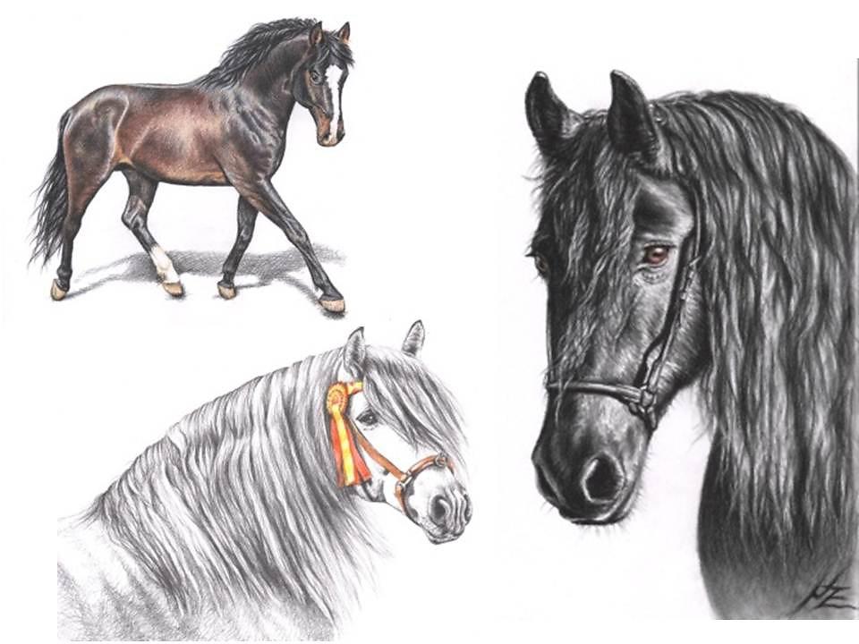 dawanda-pferde.jpg